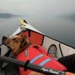 Best Kayaks For Dogs: Dog-Friendly Kayaks For Ultimate Experience