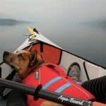 How to Kayak with a Dog - 8 Tips to Take Your Pooch Canoeing, Kayaking