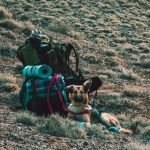 How to Camp With Your Dog – 11 Expert Tips for Camping With a Dog