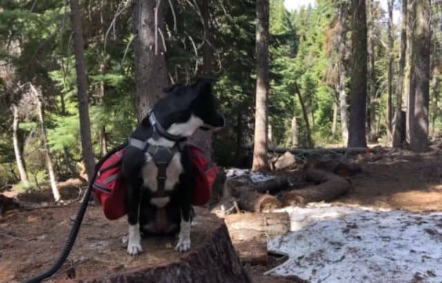 hiking with pets