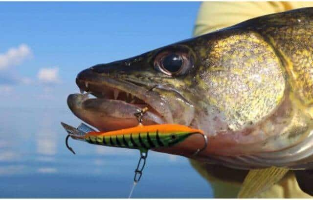 walleye fishing for beginners