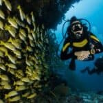 Is Scuba Diving an Extreme Sport? | Facts You Don't Know About Scuba Diving
