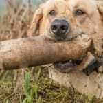 5 Benefits of Taking Your Dog to Hunt   Discover the Unknown Advantages