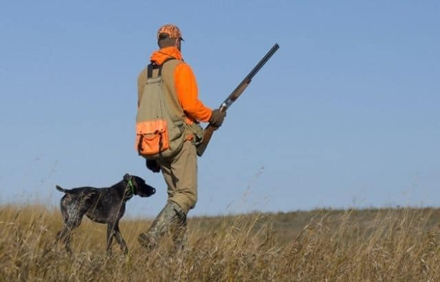 benefits of taking your dog to hunt