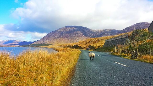 Tips to Enjoy a Wonderful Road Trip in Ireland