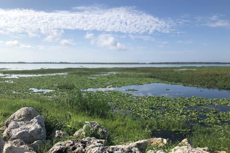Beauty And Uniqueness of Lake Tohopekaliga